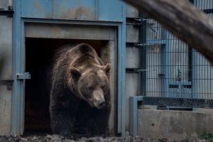 Pécsi Állatkert medve