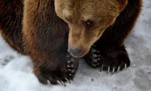 Medveárnyék a Budapesti Állatkertben