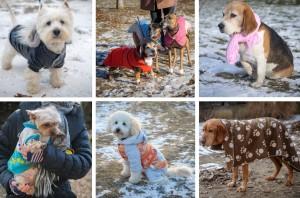 Kutyák felöltöztetve  Debrecenben